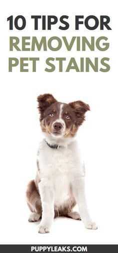 10 Tips For Cleaning 10 Tips For Cleaning Up Pet Stains From