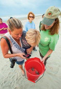 Charleston beach turtles