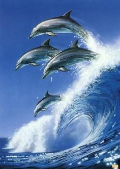 whale surfing