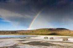Kenia Kenya Bildband