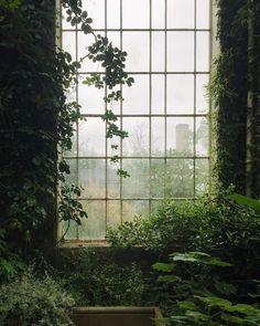 Natur im Innenraum // Fotografie von Haarkon / India & Magnus ( Dark Green Aesthetic, Plant Aesthetic, Nature Aesthetic, Aesthetic Grunge, Aesthetic Vintage, Slytherin Aesthetic, All Nature, Green Nature, House Nature
