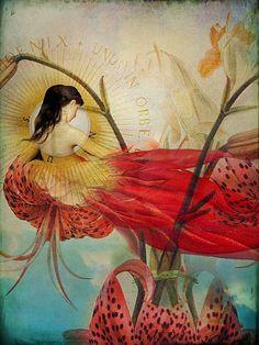 Catrin Welz-Stein | Lilies Wish