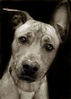 Such a complex expression -wise and questioning. Shelter dog.