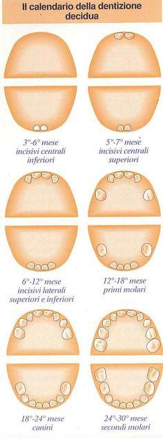 Salute bimbo: Il calendario dei dentini da latte - Dentizione - NostroFiglio.it