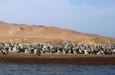 To miejsce jest naturalnym siedziskiem wielu ciekawych ptaków, słoni morskich, a nawet pingwinów