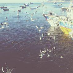 It was like the movie #thebirds  #AlfredHitchcock #movie #beach #sea