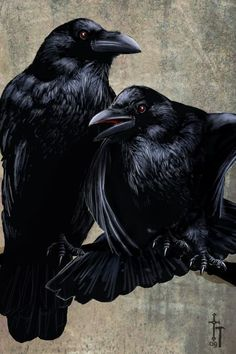 'Ravens+-+Pen,+Ink+and+Gouache'+by+Christian+Hammer+on+artflakes.com+as+poster+or+art+print+$18.71