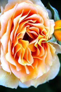 Wow wat een super mooie bloem