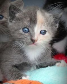 How cute is this little kitten?