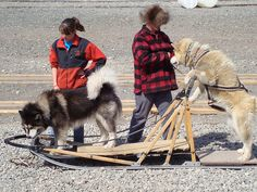 Seavey's Iditaride Sled dog rodeo - cute, entertaining and informative!