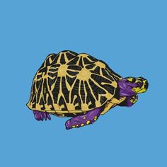 Say hello to the or an endangered species in the Obviosly they arent really but in my series they are all Photographs Of People, Endangered Species, Say Hello, Vector Design, Tortoise, Digital Art, My Arts, Photoshop, Purple