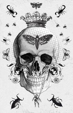 #skull with #insects and #moths