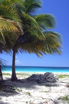 Palm tree on Vieques beach