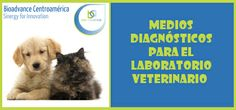 Medios Diagnósticos para el Laboratorio Veterinaio