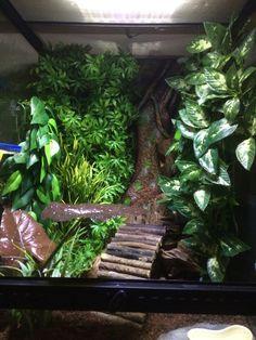 Crested gecko set up - find the gecko