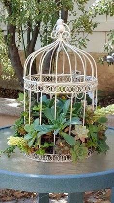 Succulents in a bird cage. Easy project using a repurposed cage. Since the cage had an open bottom we built a small wire mesh cage that fit inside to hold the planting medium... Sphagnum Moss.