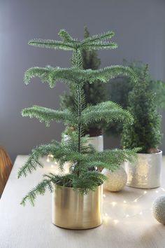 Stuegran er en av de mest trendy vintergrønne plantene i år.