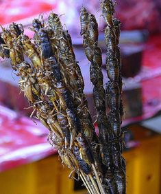 ✈ Asian Travel Chinese street food Bugs on a stick. Chinese Street Food, Korean Street Food, World Street Food, Work Potluck, Food On Sticks, Good Food, Yummy Food, Weird Food, Exotic Food