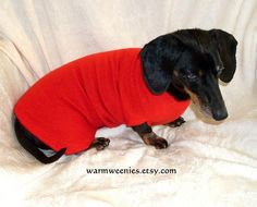 Silk and cashmere dachshund sweater buttery soft little red dress handmade pets clothing Dachshund Sweater, Dapple Dachshund, Dog Sweaters, Little Red Dress, Dachshunds, Pet Clothes, Handmade Clothes, Small Dogs, Rib Knit