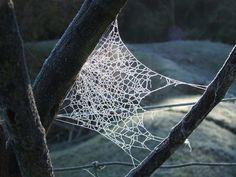 Frost Webs Frost, Kawaii, Nature, Naturaleza, Nature Illustration, Off Grid, Natural