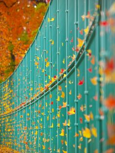 Art of Wind by Kaz Watanabe500px.com  Colorful leaves
