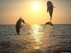 Papéis de Parede - Golfinhos: http://wallpapic-br.com/animais/golfinhos/wallpaper-30603