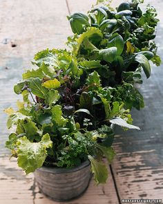These plants are ready to be picked and tossed into the salad bowl, making it the perfect gift.