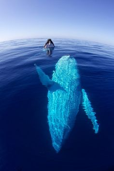 I want to swim with and touch one someday :)