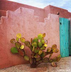 cactus, pink stucco and turquoise [ MexicanConnexionForTile.com ] #spanishstylehouse