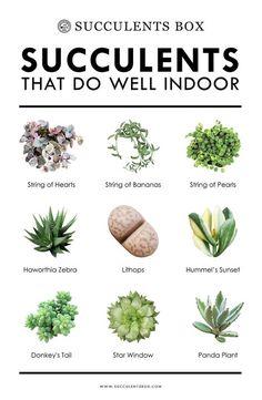 10 types of succulents that work well indoors - Haus und heim - Pflanzen Succulent Gardening, Succulent Care, Succulent Terrarium, Cacti And Succulents, Planting Succulents, Garden Plants, Planting Flowers, Propagating Succulents, Organic Gardening