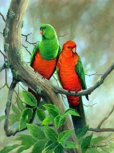 Australian King Parrots I so wish we had all the Aussie birds here.they are so pretty Australian Parrots, Australian Art, Amazon Birds, Parrot Pet, Parrot Bird, Toucan, Scratchboard Art, Bird Species, Bird Art