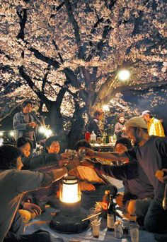 """Hanami -- The traditional Japanese custom of enjoying the beauty of flowers. Young people make merry under the sakura (cherry blossoms) late into the evening."" - What a beautiful word - am impressed that words exist to describe the joy in an event. I hope you all have Hanami and make some merry today :)"