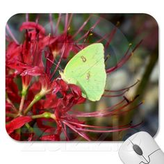 Yellow Butterfly on Red Spider Lily Mousepads
