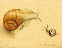 Things of beauty I like to see - Niklaus Stoecklin - Nature Illustration, Botanical Illustration, Animal Paintings, Animal Drawings, Chiara Bautista, Snail Tattoo, Snail Art, Watercolor Journal, Watercolour