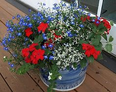 garden with Lobelia, geraniums.So pretty for of July! garden with Lobelia, geraniums.So pretty for of July!garden with Lobelia, geraniums.So pretty for of July! Container Gardening Vegetables, Succulents In Containers, Container Flowers, Container Plants, Vegetable Gardening, Fall Planters, Flower Planters, Flower Pots, Cactus Flower