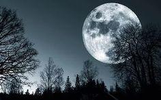 over dark forest, photograph, christian lagereek, moon, full-moon, moonligh...