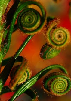 spirals in nature Green And Orange, Shades Of Green, Orange Color, Yellow, Scenery Photography, Macro Photography, Natural Forms, Natural Wonders, Spirals In Nature