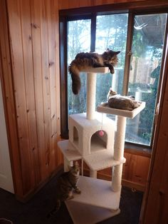 Armarkat Cat tree Furniture Condo, Height -50-Inch to 60-Inch http://www.amazon.com/gp/product/B003BYQ100/ref=as_li_ss_tl?ie=UTF8=1789=390957=B003BYQ100=as2=longtai-20