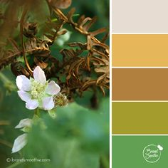 Golden Leaves colour palette by Brand Smoothie