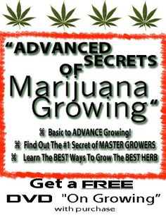 How to Grow Marijuana Indoor and Outdoor - The Fastest Easiest way to Grow the Best Marijuana | How to Grow Legal Marijuana | How to grow Medical Marijuana by Obadiah Switzer, http://www.amazon.com/dp/B009GSSDD8/ref=cm_sw_r_pi_dp_gwf5qb1B2XNGF