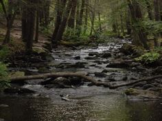 Hiking trails - Picture of Babbling Brook Cottages, Dingmans Ferry ...