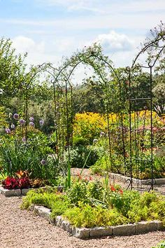 To add vertical height to your potager garden, straddle carrot and lettuce beds with tall metal arbors, covered in red-flowering cardinal vine that soften the hard metal without shading the garden. | Photo: John Gruen