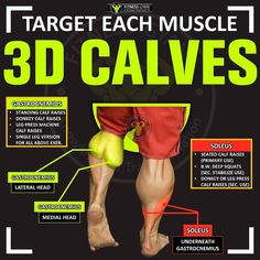 When you can see the outer calf from the front type of thing is. Calf Exercises, Calf Workouts, At Home Workouts, Baby Cows, Baby Elephants, Giraffes, Elephant Baby, Lower Body Muscles, Calf Muscles