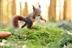squirrel in action - squirrel in action www.facebook.com/PartridgePetPics www.ppp-tierfotografie.de