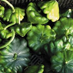 Squash G-Star in The Big Seed Book from Park Seed on shop.CatalogSpree.com, my personal digital mall.