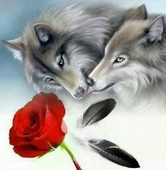 Wolf love - Native Americans and their Animal Spirit Guides - Wolf Images, Wolf Photos, Wolf Pictures, Animal Spirit Guides, Wolf Spirit Animal, Beautiful Wolves, Animals Beautiful, Two Wolves Tattoo, Wolf Craft