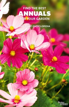 Annuals Find the perfect annuals for your yard in BHG's Plant Encyclopedia.