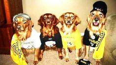 647f77abc92 Steeler dogs. JeromeBettisGrille36 · Steelers Pet