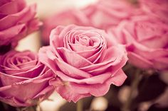 rose, flowers, and pink image Pink Flowers, Red Roses, Beautiful Flowers, Pink Petals, Beautiful Scenery, Colorful Flowers, Paper Flowers, Beautiful Pictures, Vanitas