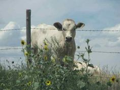 Interested onlooker by Weskan, KS,  Highest point in the State on Harold Ranch.